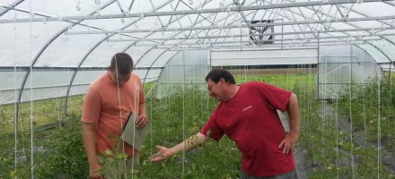 Growing Tomatoes at Turner Family Farms