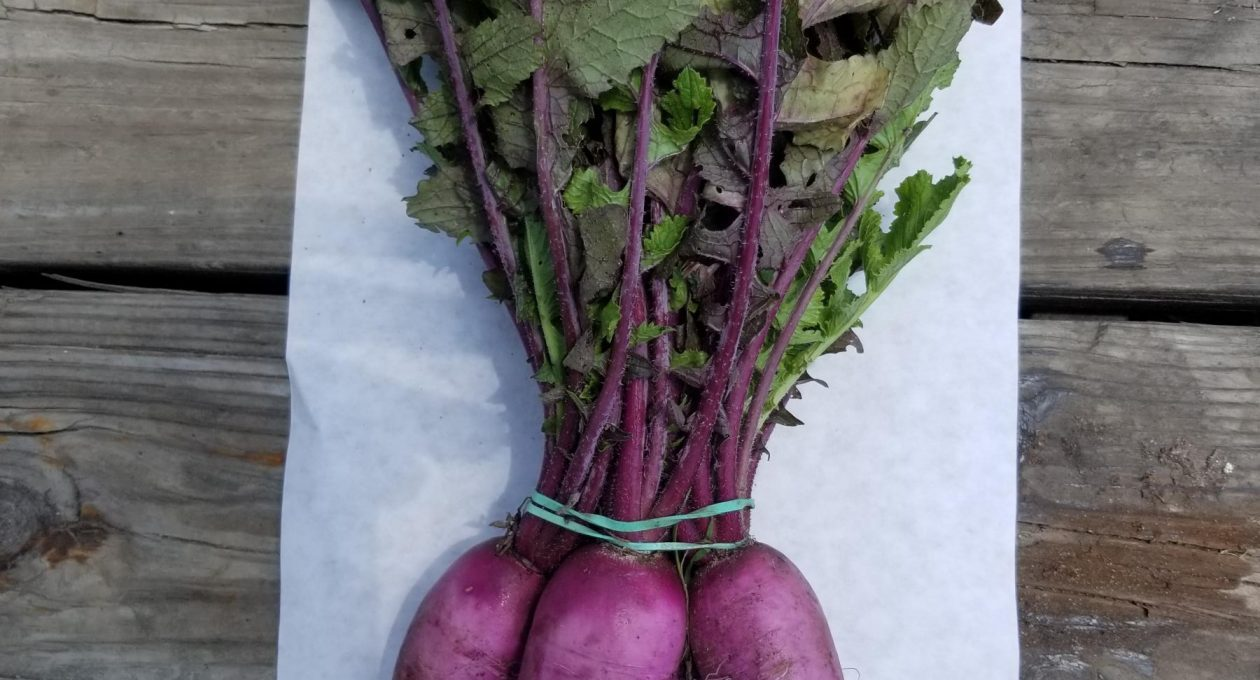 CSA Box for May 23, 2019