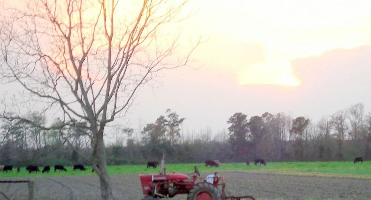 About Turner Family Farms