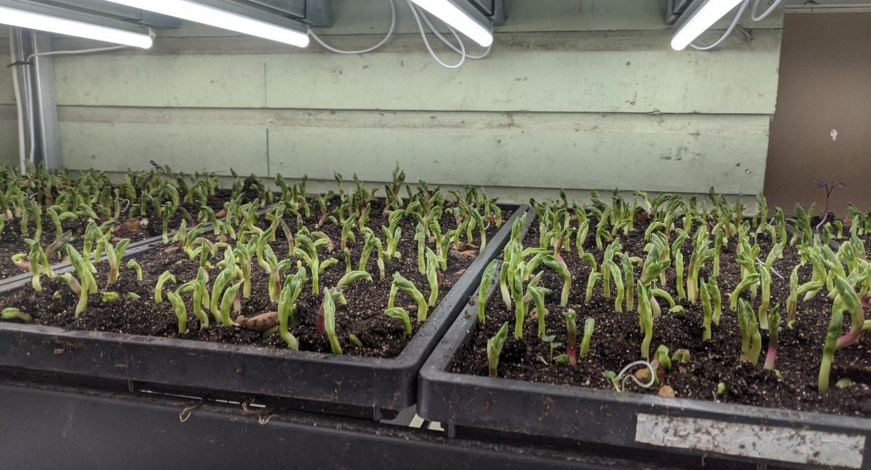 Farm News: New Micros and a New Cooler