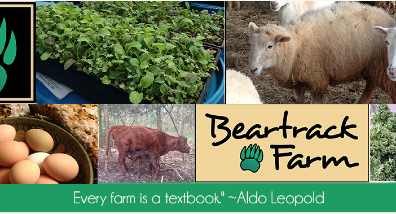 A Guest Post from Sharon Funderburk, Beartrack Farms